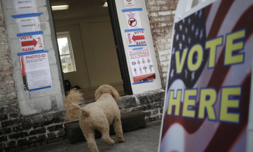 A dog enters a polling station as residents vote in the South Carolina Republican presidential primary election in Charleston, South Carolina, U.S., on Saturday, Feb. 20, 2016. With South Carolina polls closing at 7 p.m., voters will have their say in the Republican presidential contest as Donald Trump, who holds a commanding lead in most South Carolina polls, and five other Republican candidates face off. Photographer: Luke Sharrett/Bloomberg via Getty Images